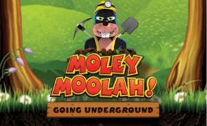 moley moolah slotti